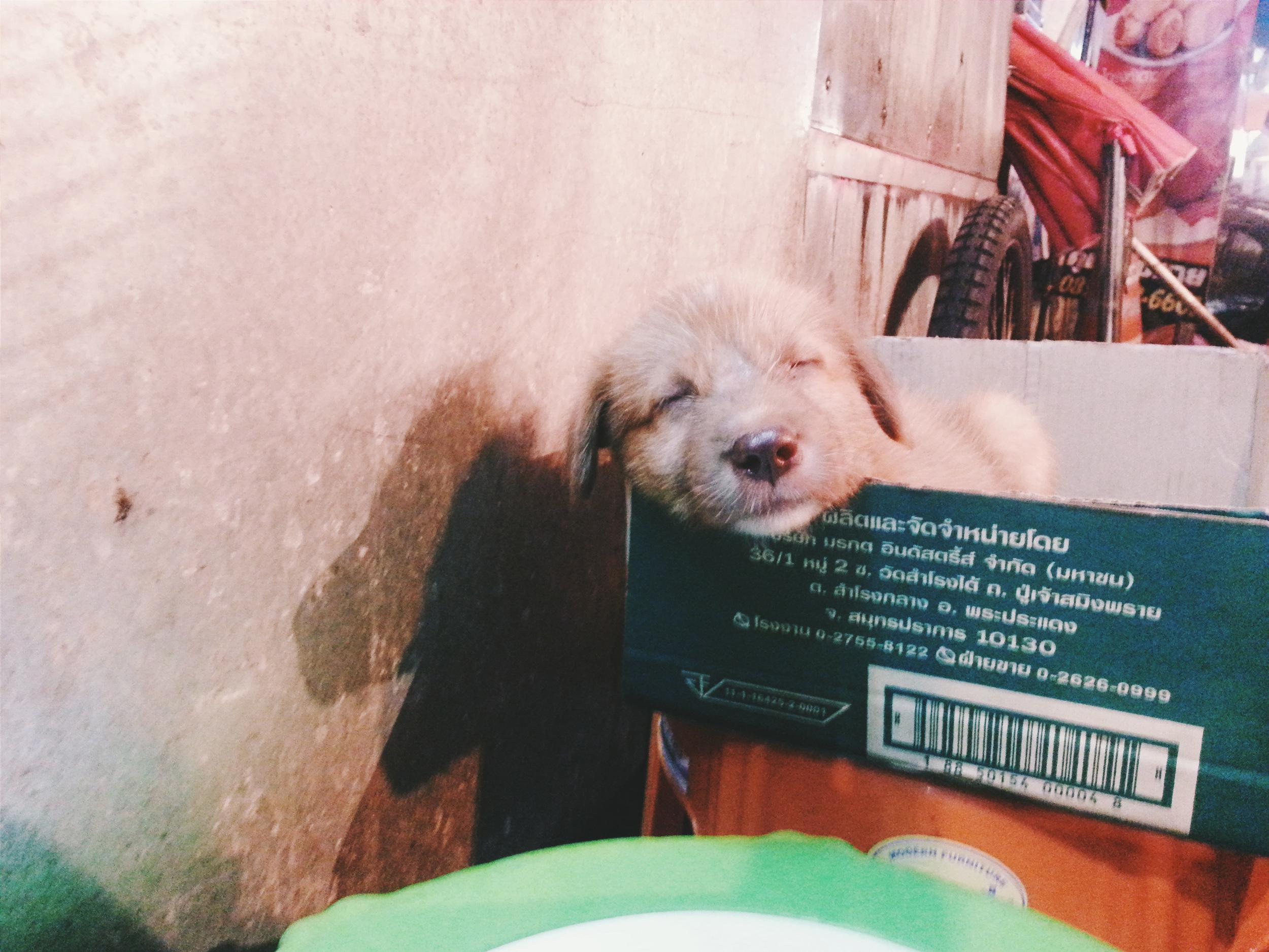 puppy in market thailand