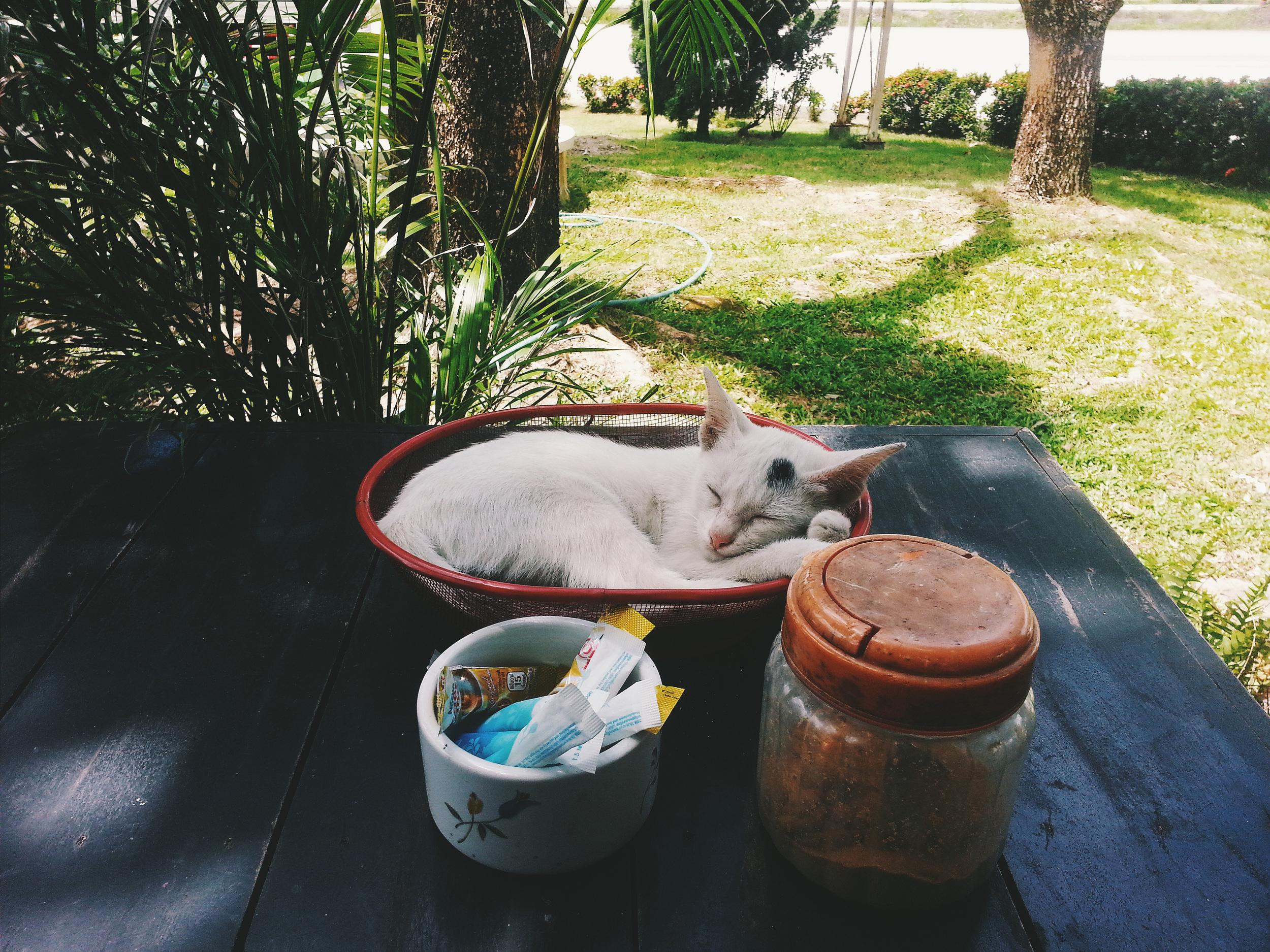 kitten in basket thailand