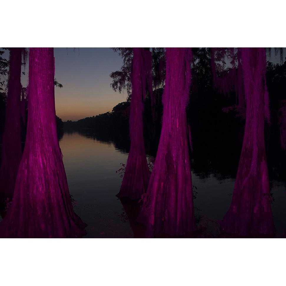 pinktrees_971a.jpg