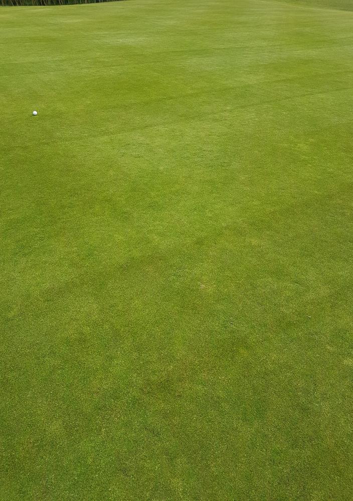 Greens surface May 2017