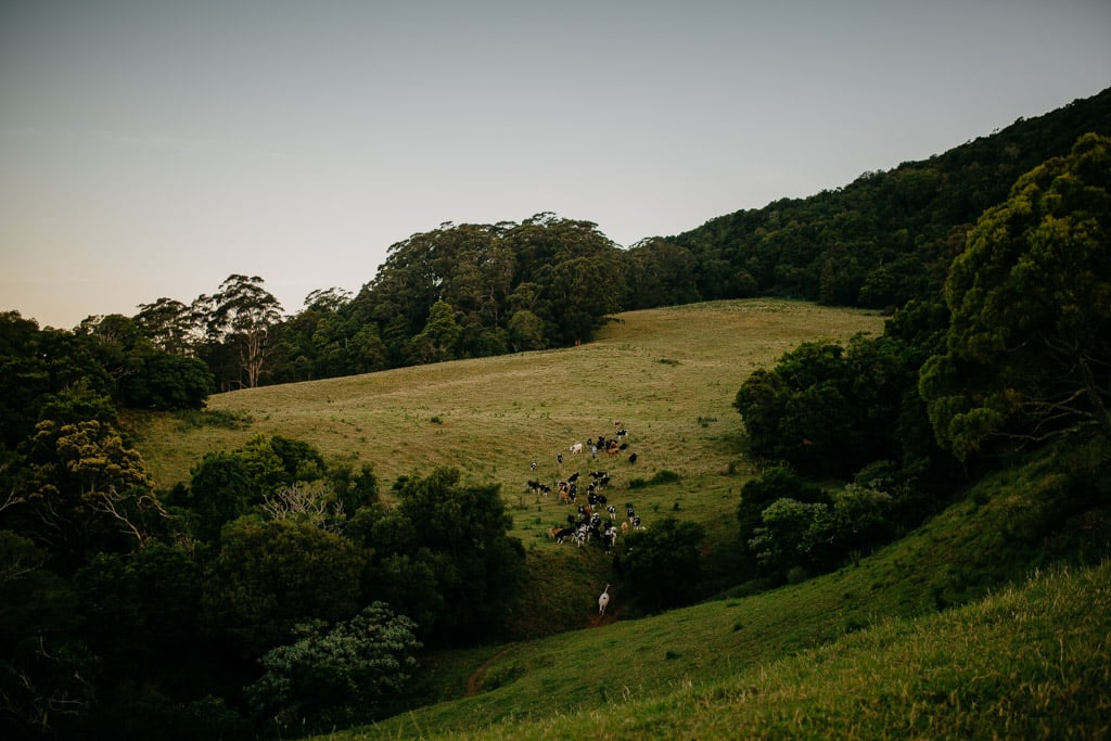 SouthCoastFamilyPhotographyAlanaTaylorPhotography-180.jpg