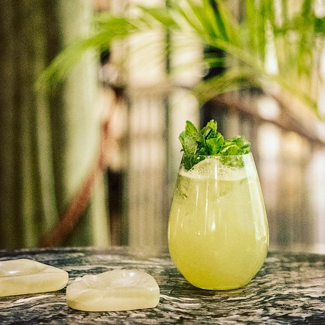 🌴🌿🌱🍸🌱🌿🍸🌴 Our Eastern Influence sitting pretty amongst the palms on this beautiful sunny day 🙌🏼