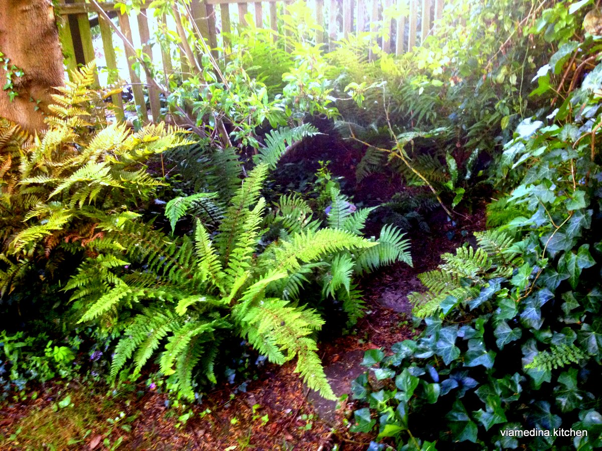 The Fernery