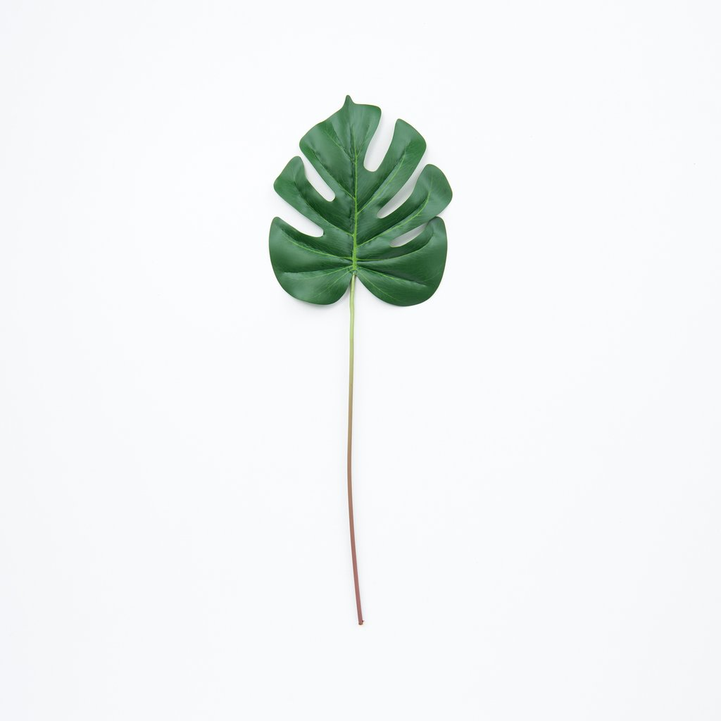 MONSTERA-LEAF_1024x1024.jpg
