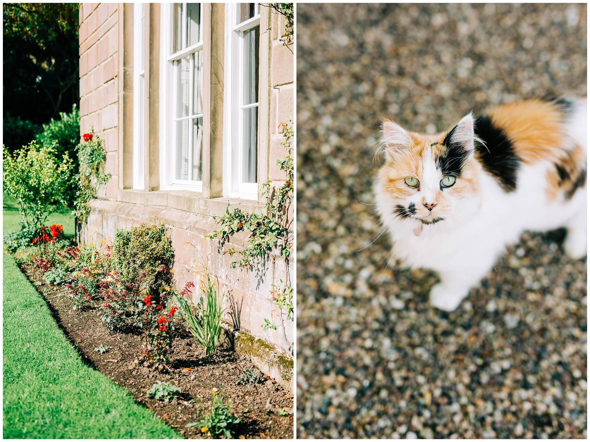 Browsholme bedding plants and the mottled coloured estate cat.