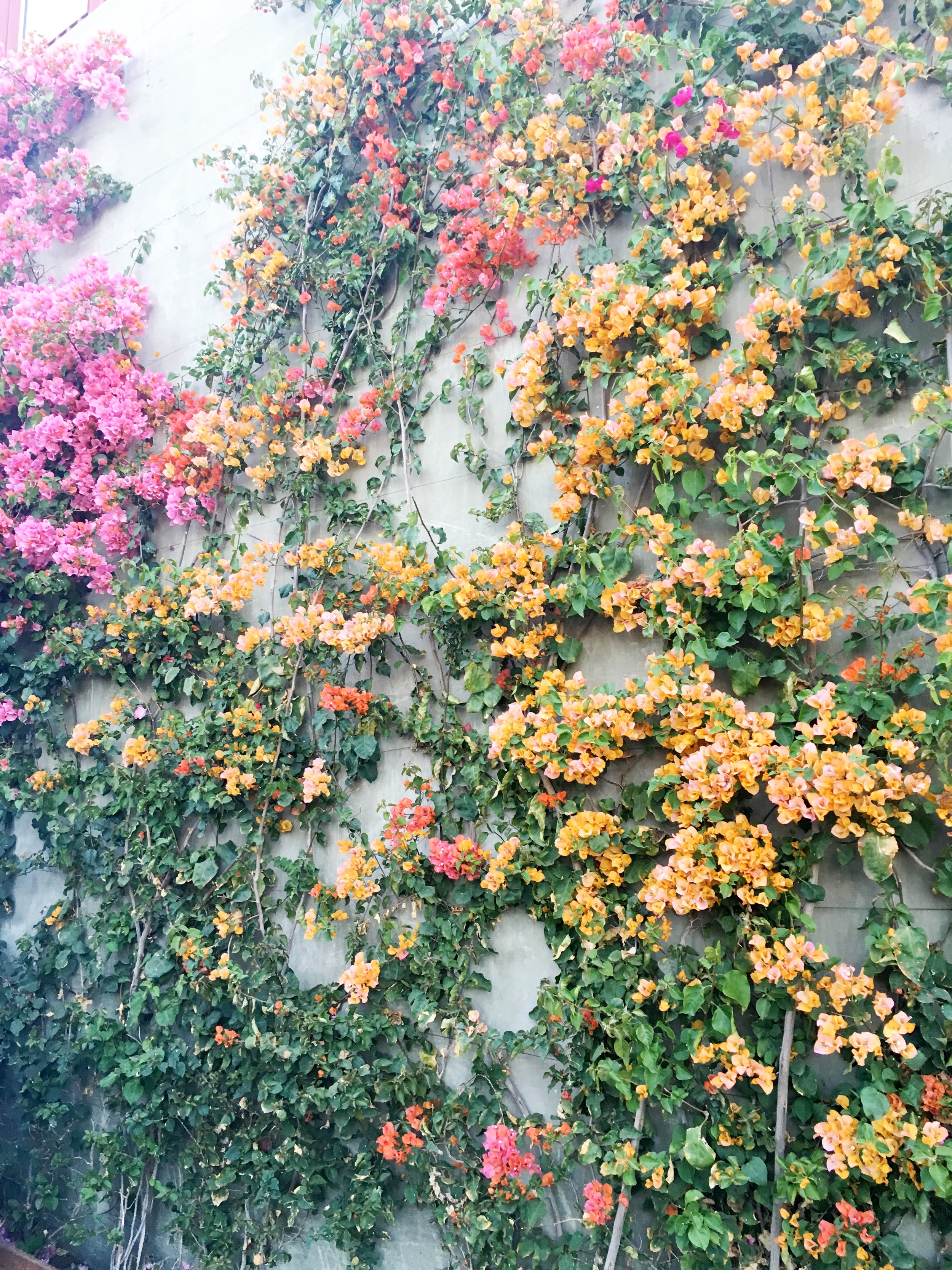 Last Spring I realize that I was obsessed with flowers (so many flower photos) and LA's flower game is so on point.