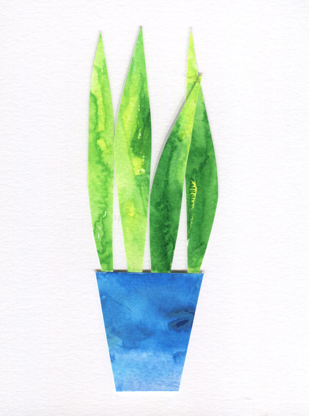 Potted Plant Collage final.jpg