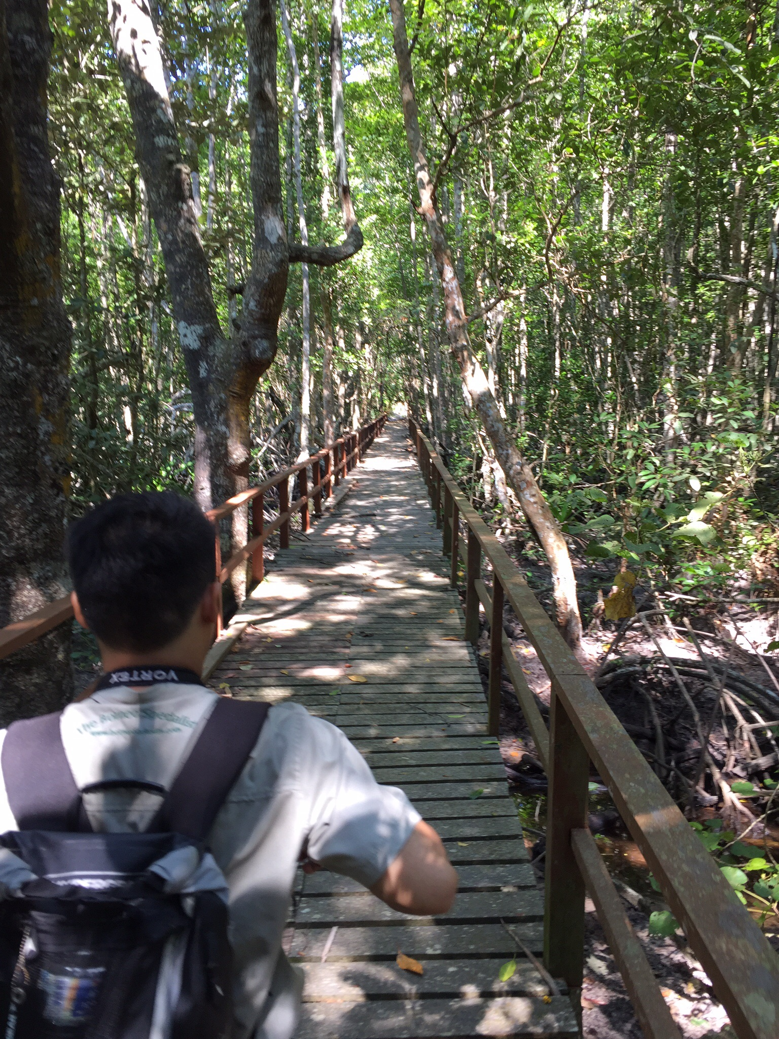 Felix and the mangrove forests. Rude of me to only have a picture of him from behind. Sorry Felix.