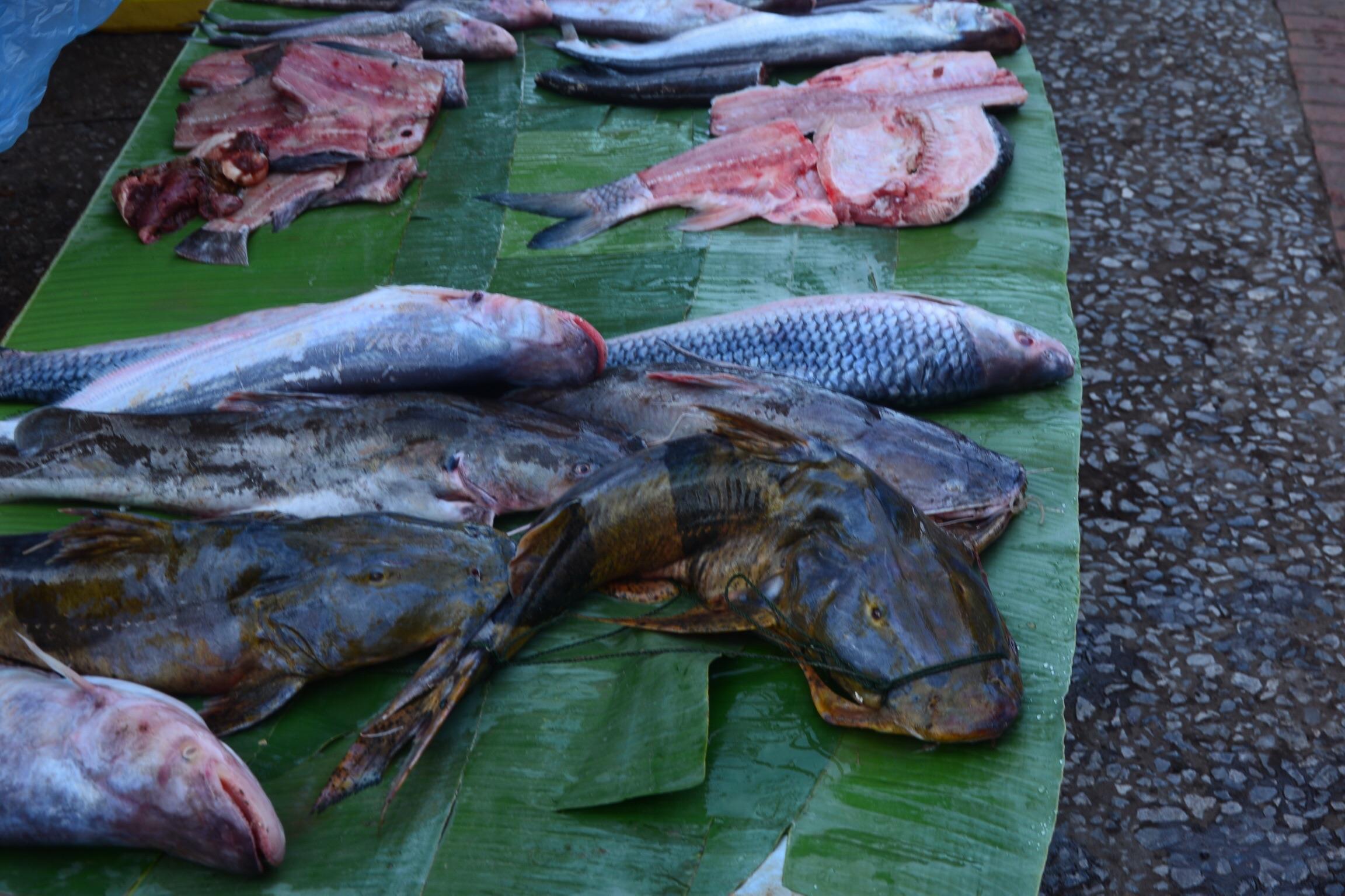 Fish at the morning market.