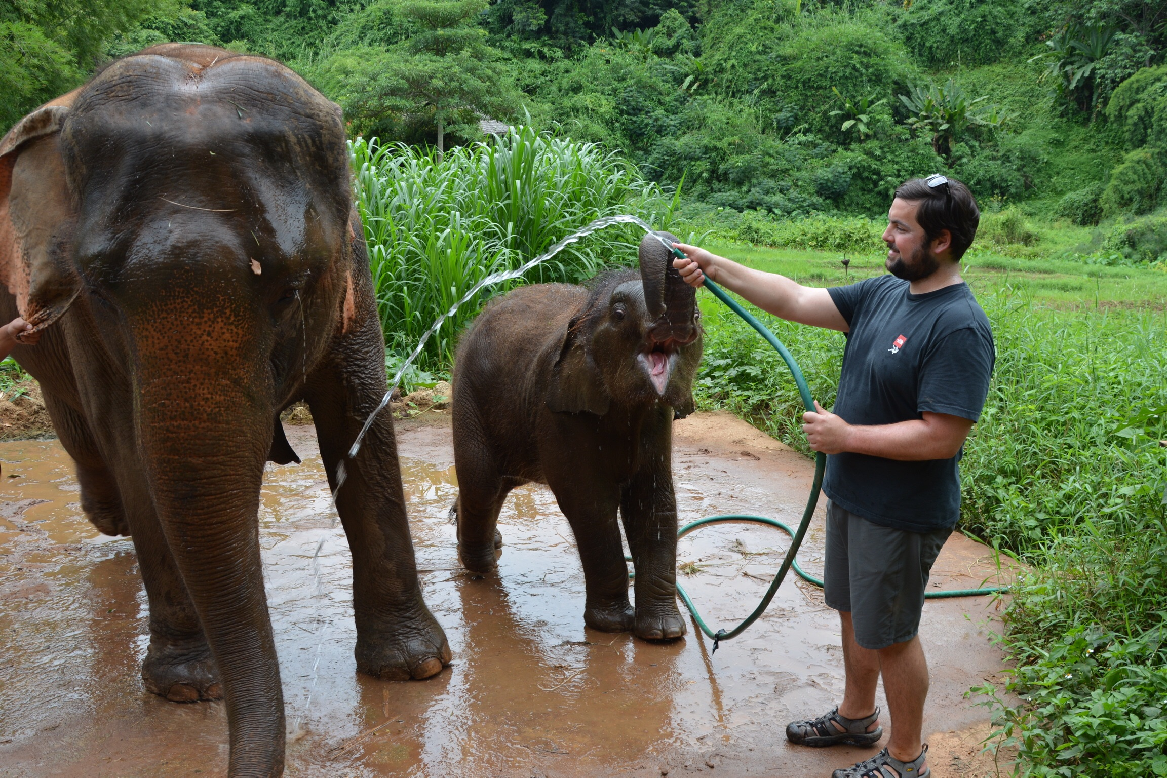 Cleaning up the elephants.