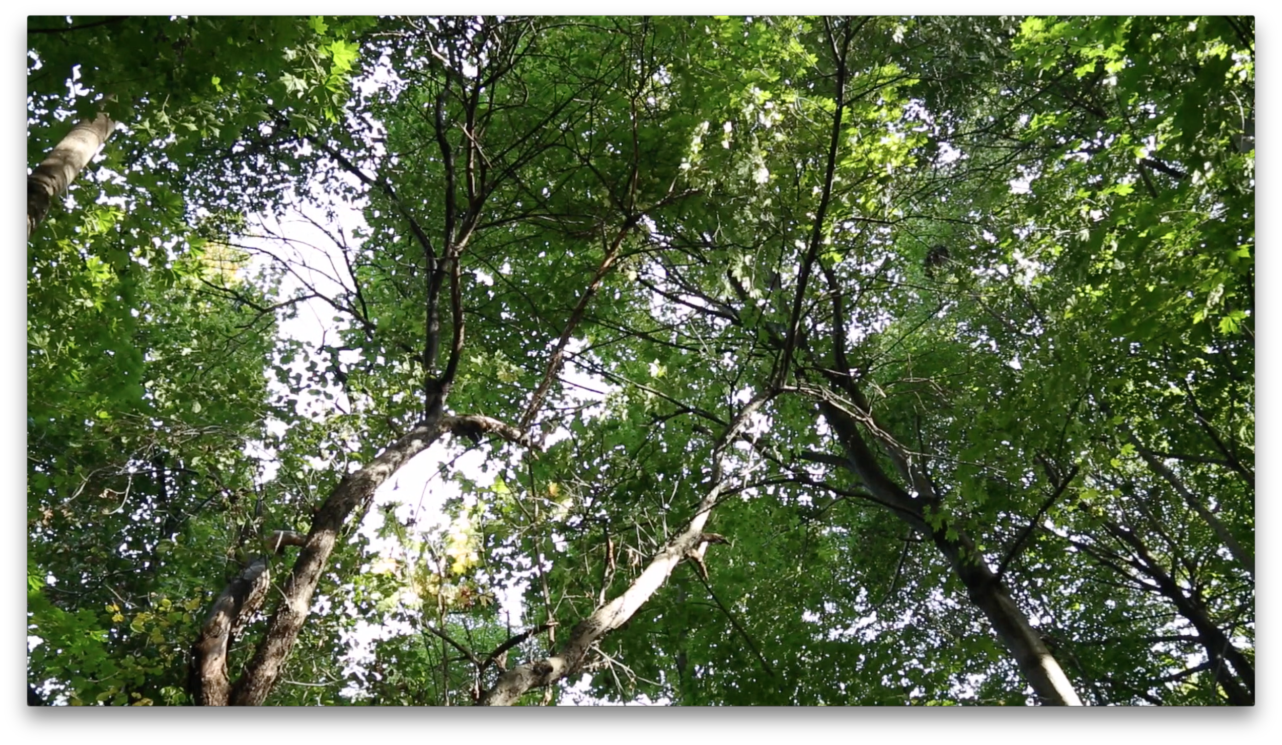 Screen Shot 2015-12-20 at 7.57.23 PM.png