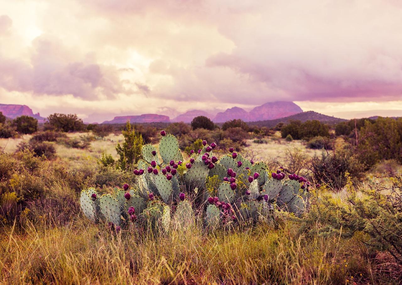 Cactus5-web.jpeg