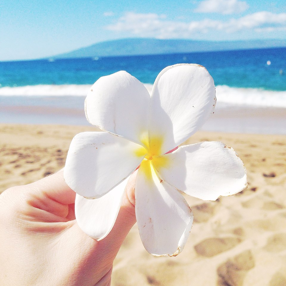 plumeria hawaii flower