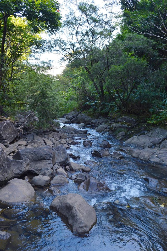 Road to Hana Stream