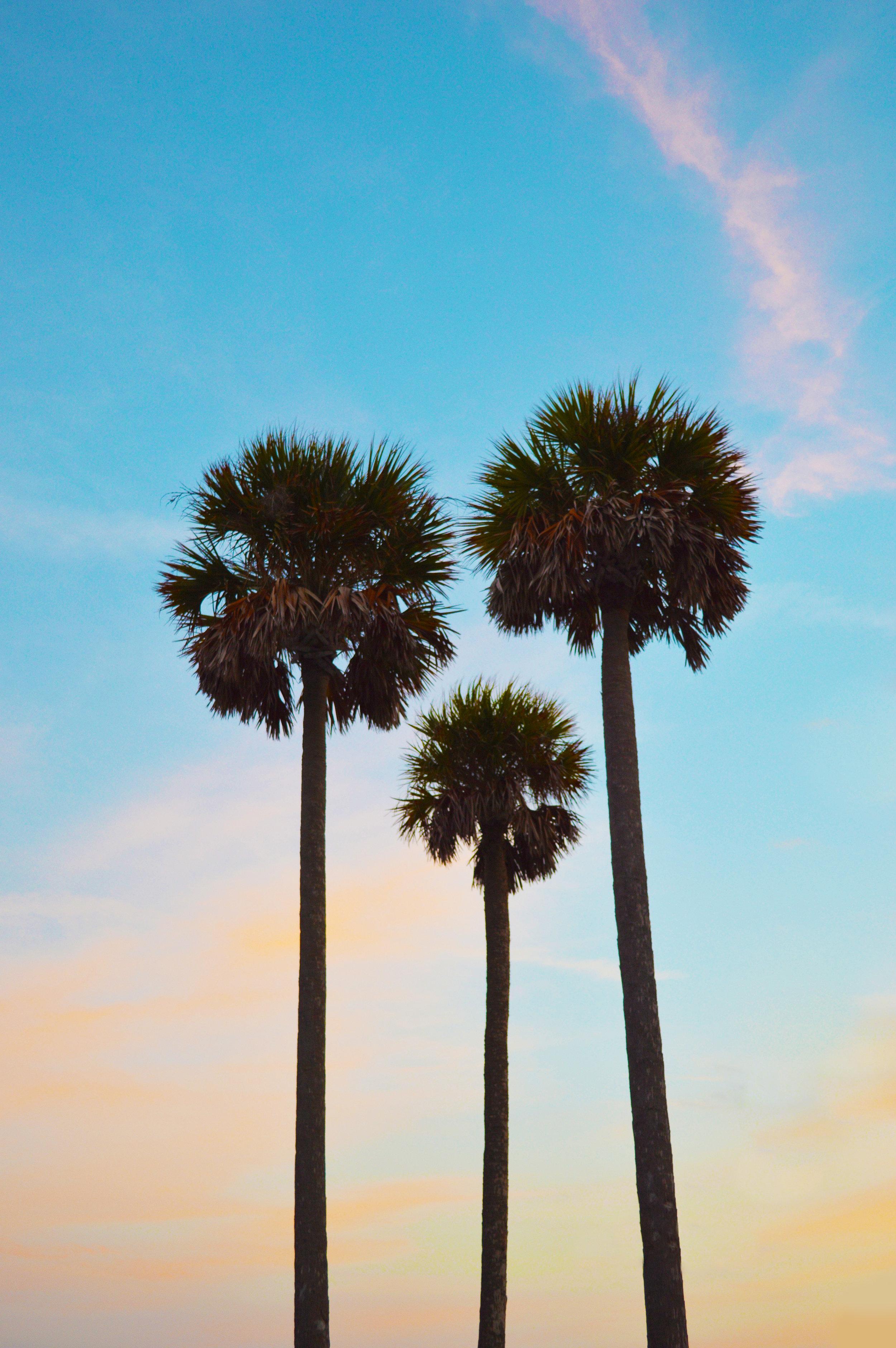 Lido Key Sarasota Florida Palm Trees photo by Kristen Laczi