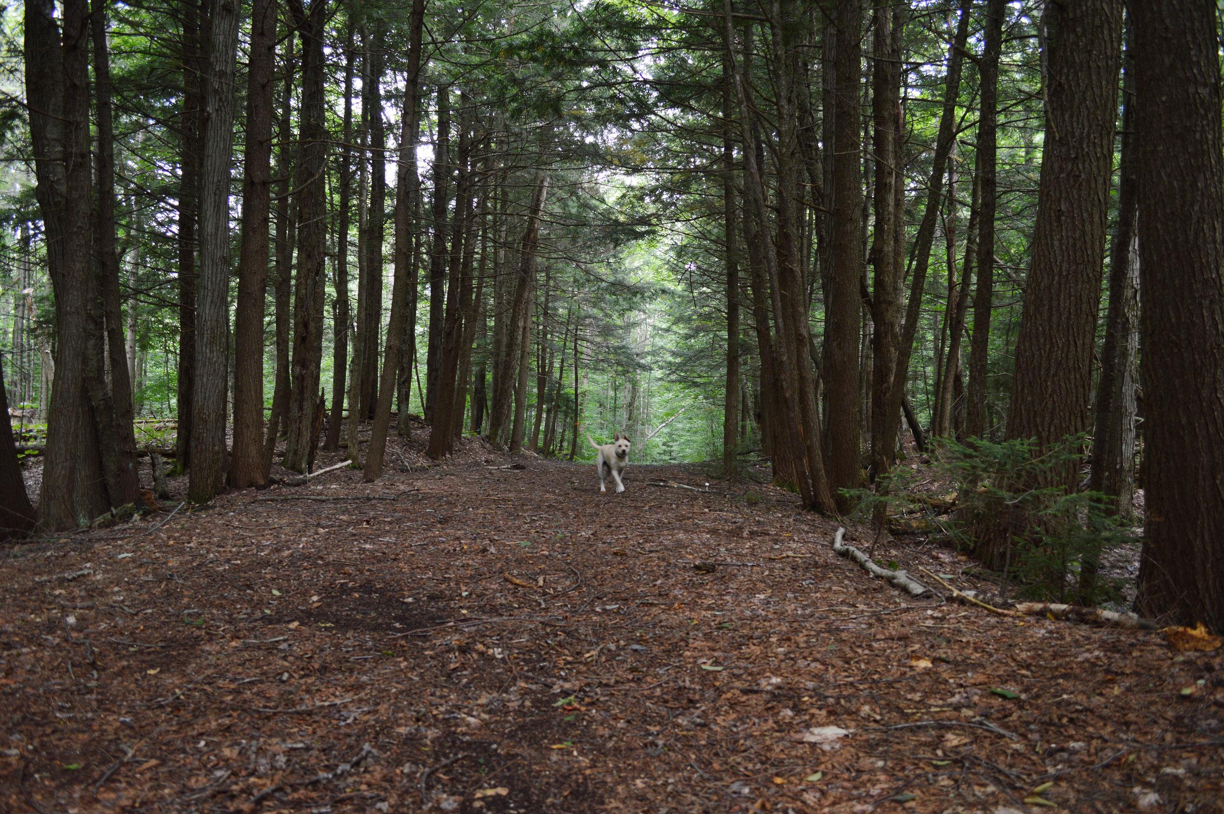 Dax hiking Adirondacks