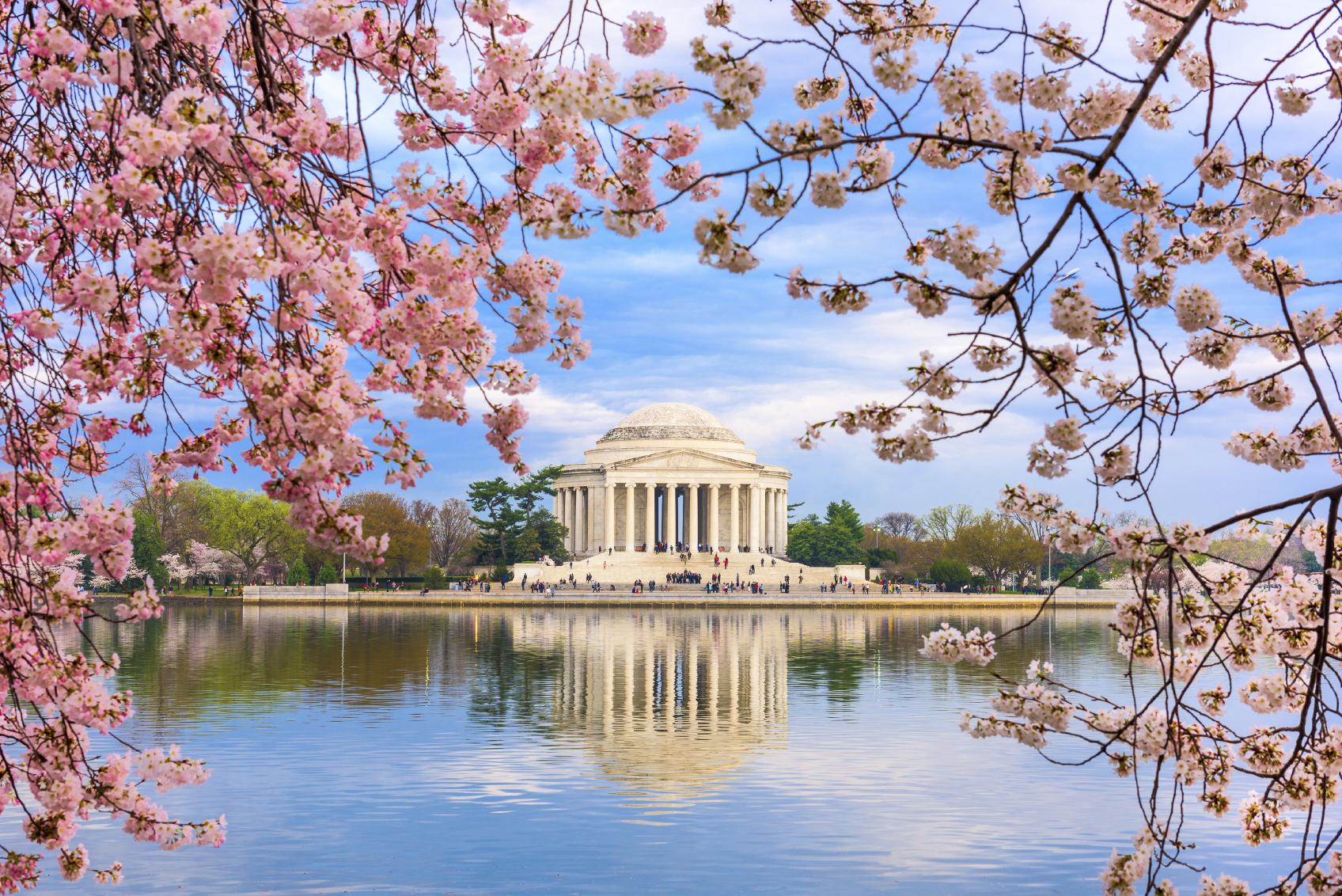 istock jefferson cherry blossom.jpg