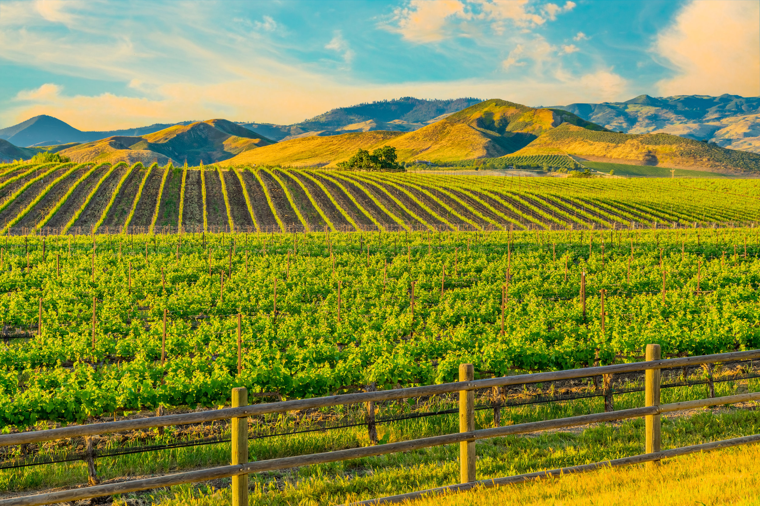 Discover California's Countryside Ranches & Vineyards