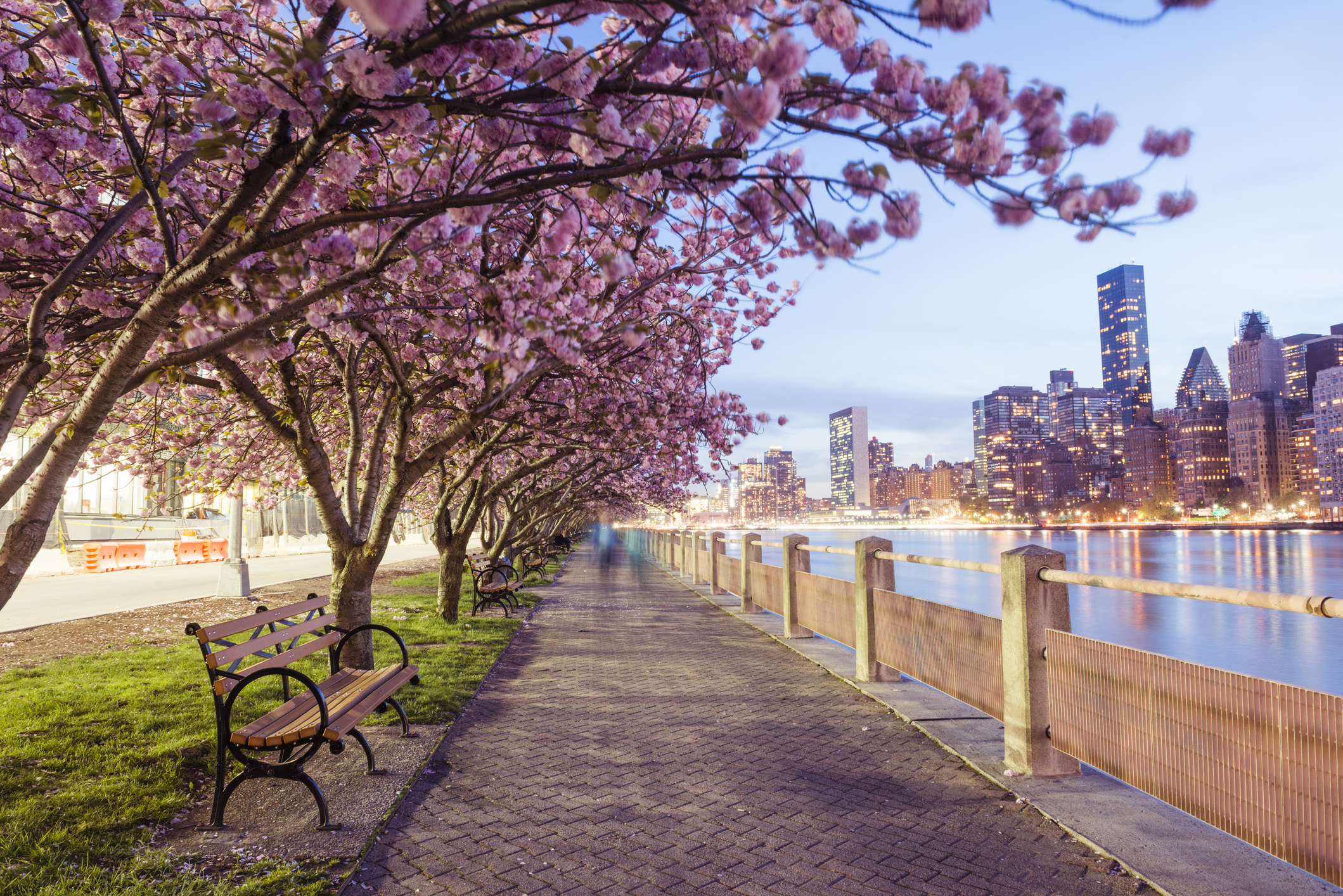 See New York City's Spring Flowers