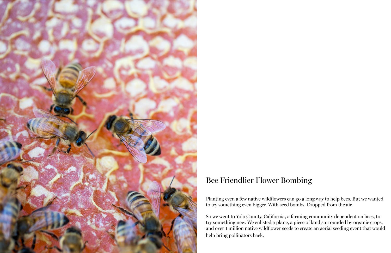 Bee 16 17.jpg