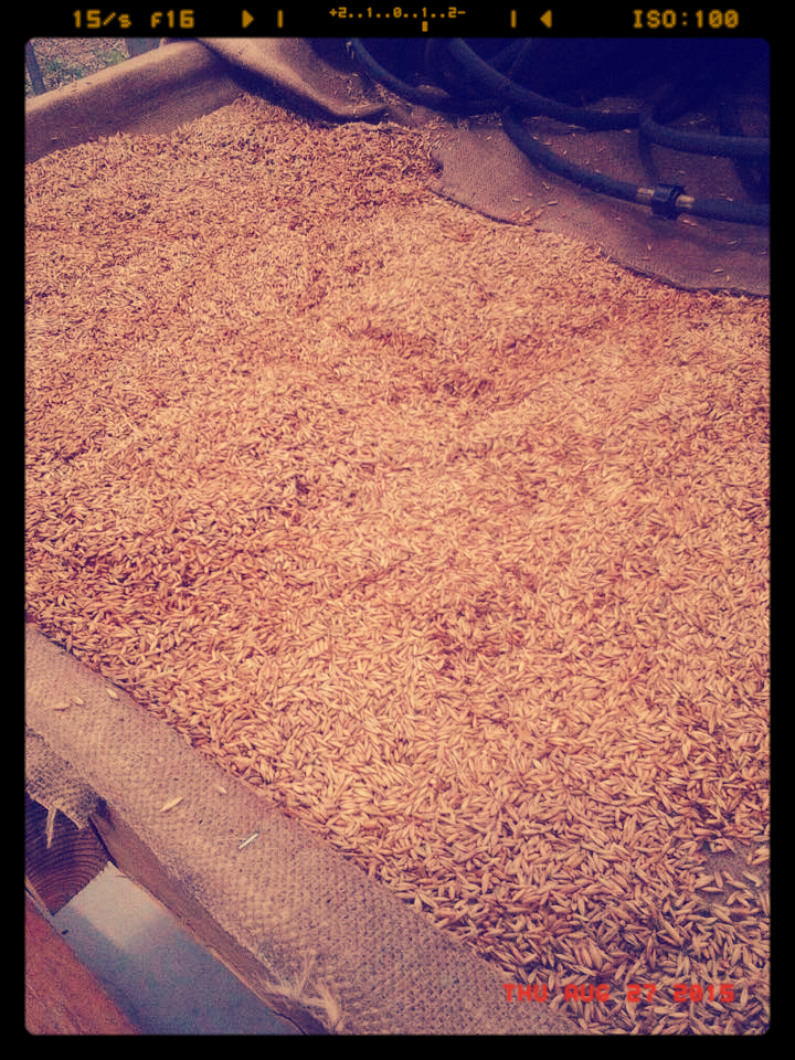 Oats getting toasty :-)