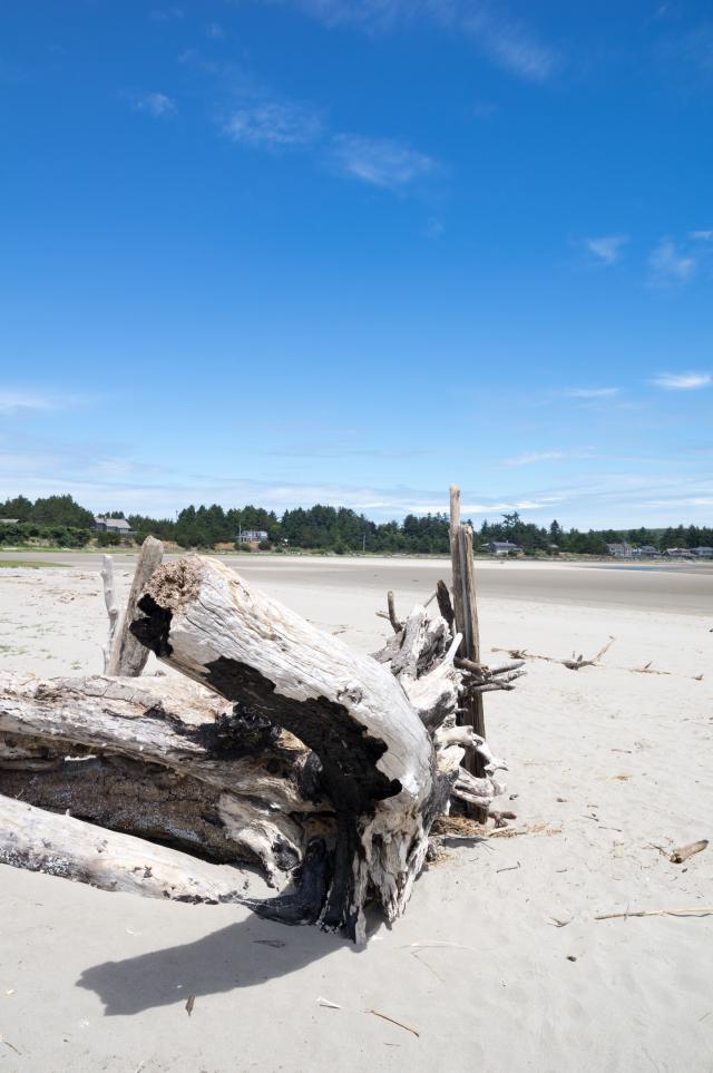 Driftwood Washup