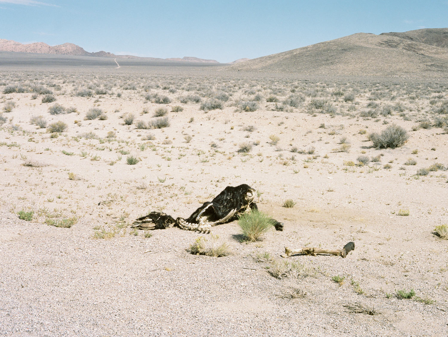 "Desert From ""American Prayer"" Nevada, 2015"