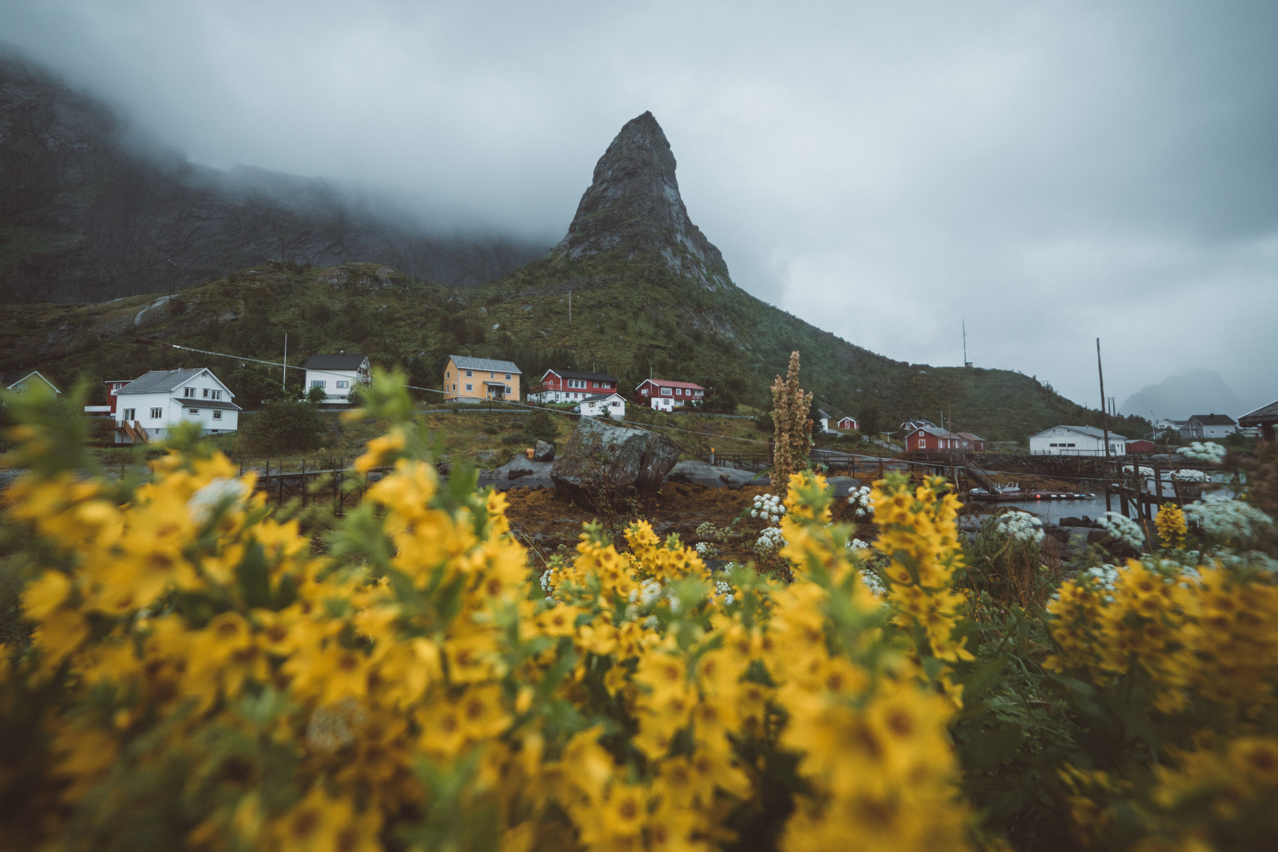 summer flowers in the Lofoten!