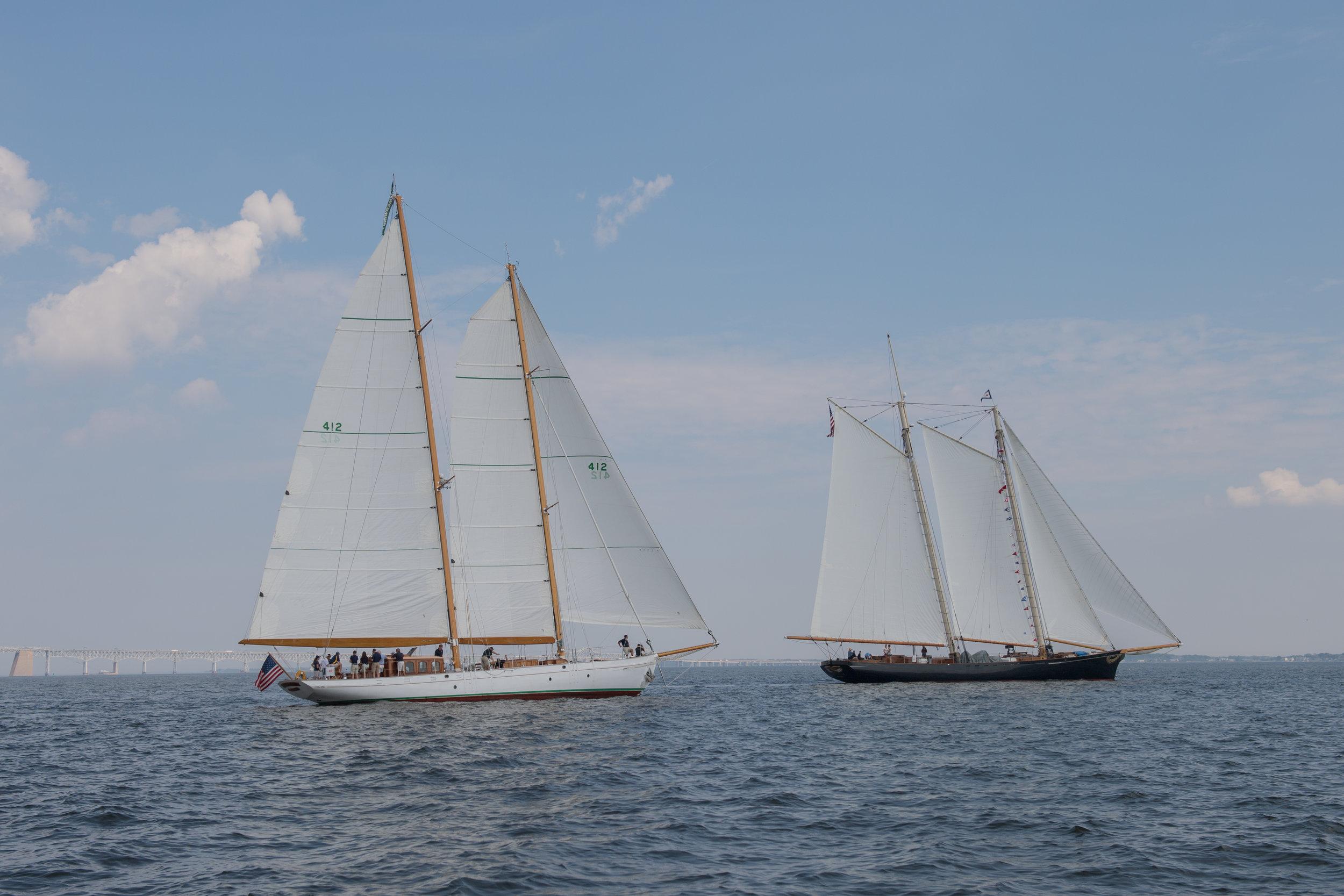 The 1929 John G Alden schooner Summerwind escorts the replica 1851 schooner America into Annapolis harbor.