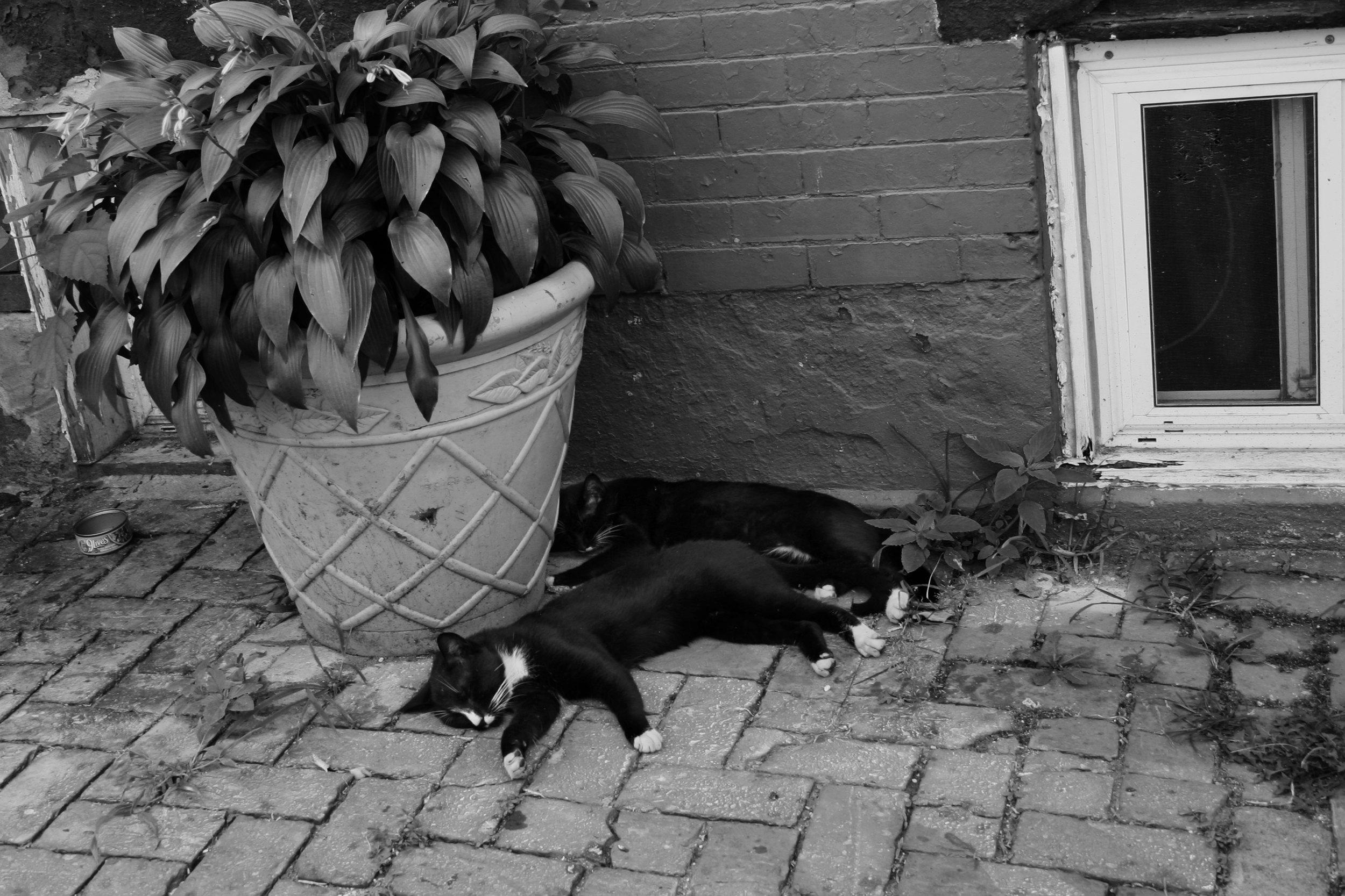 11. 30х50 Cats Sleeping.jpg