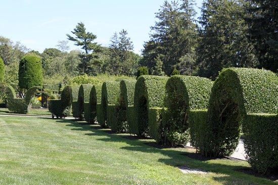 green-animals-topiary.jpg