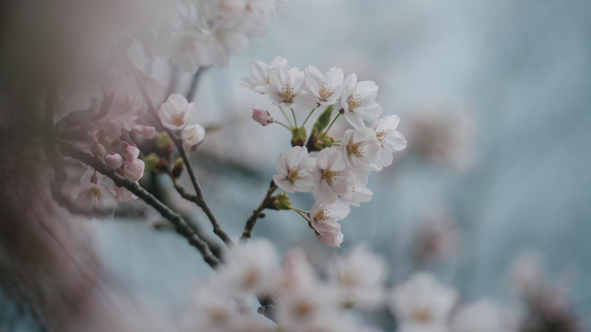 Blossoms-7671-2.jpg