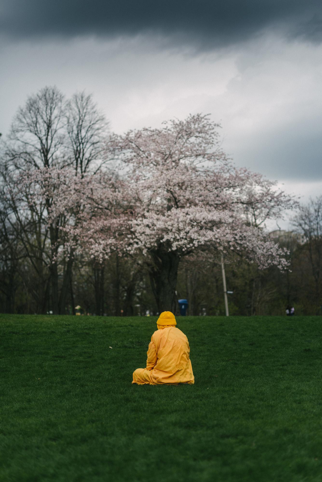 Blossoms-7696.jpg