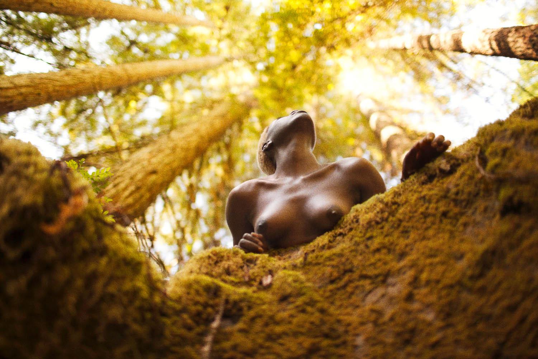 Redwoods (Dugout),  2014