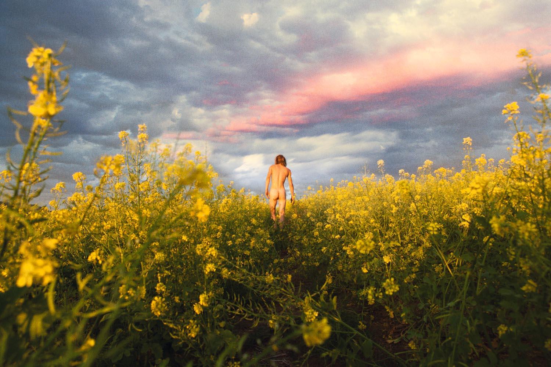 Mustard Meadow,  2012