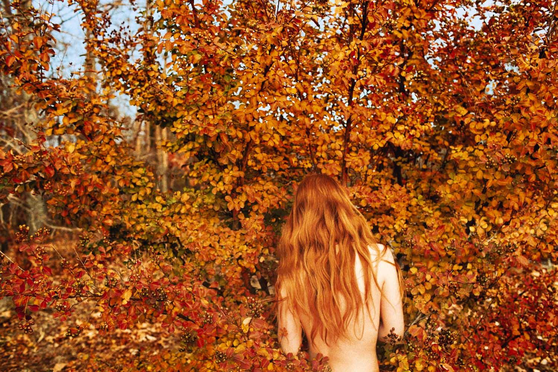 Leaves (Fall),  2013