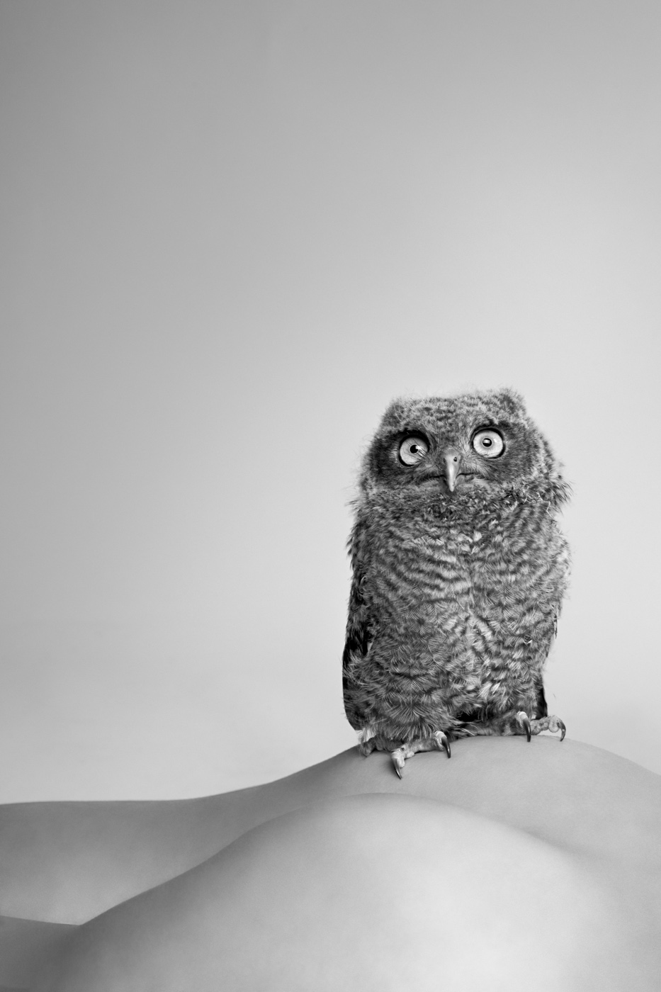 Owl,  2010