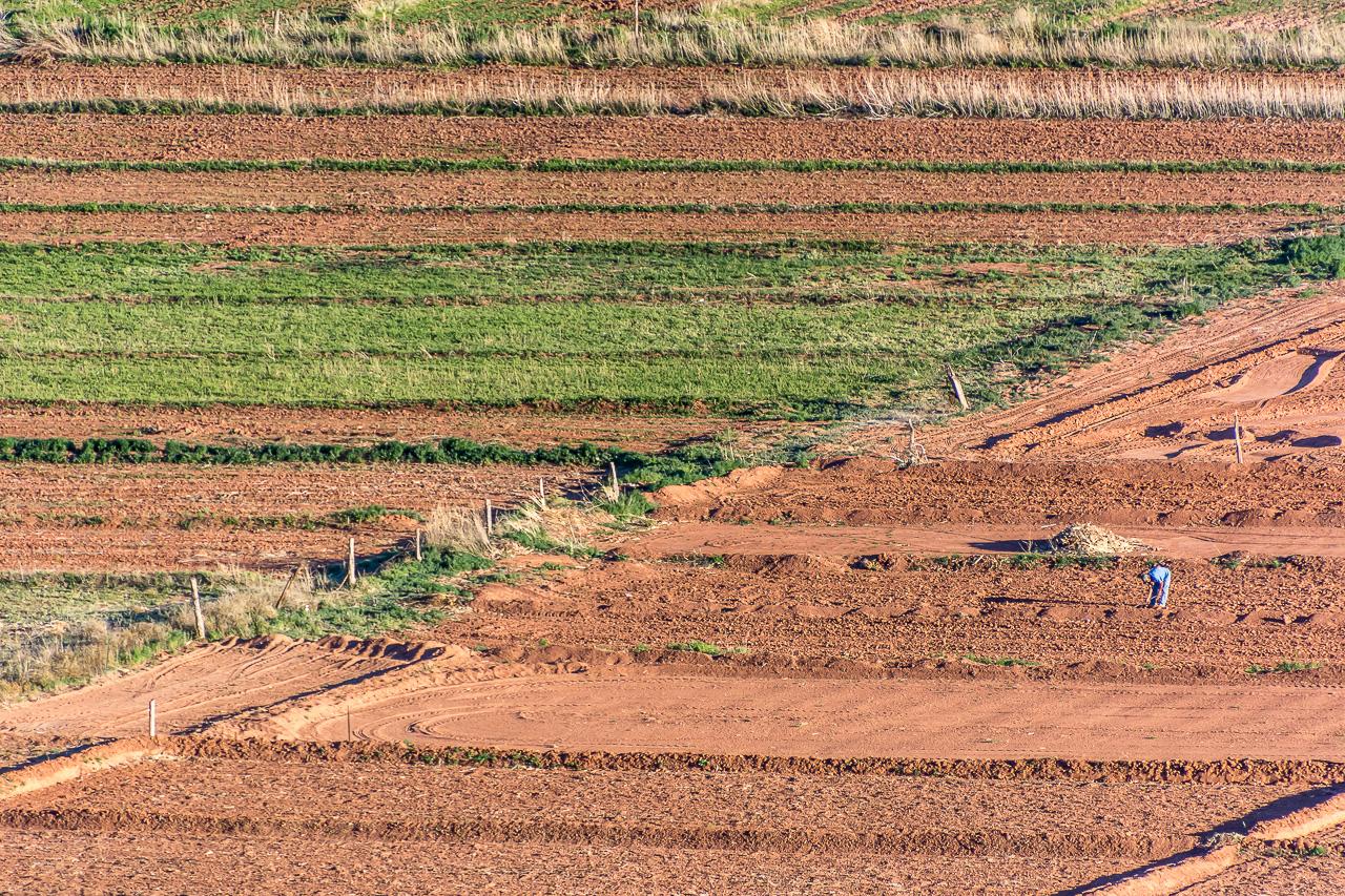 Hopi Farmer Plants His Sacred Land By Hand