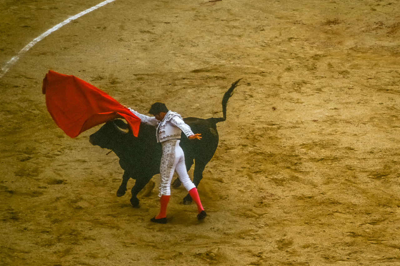 """Ole!"" as Toreador Lifts Bull's Head with Colorful Capework"