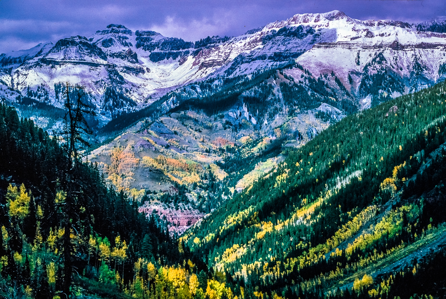 Cornucopia of Colors, Flowering Rocky Mountains