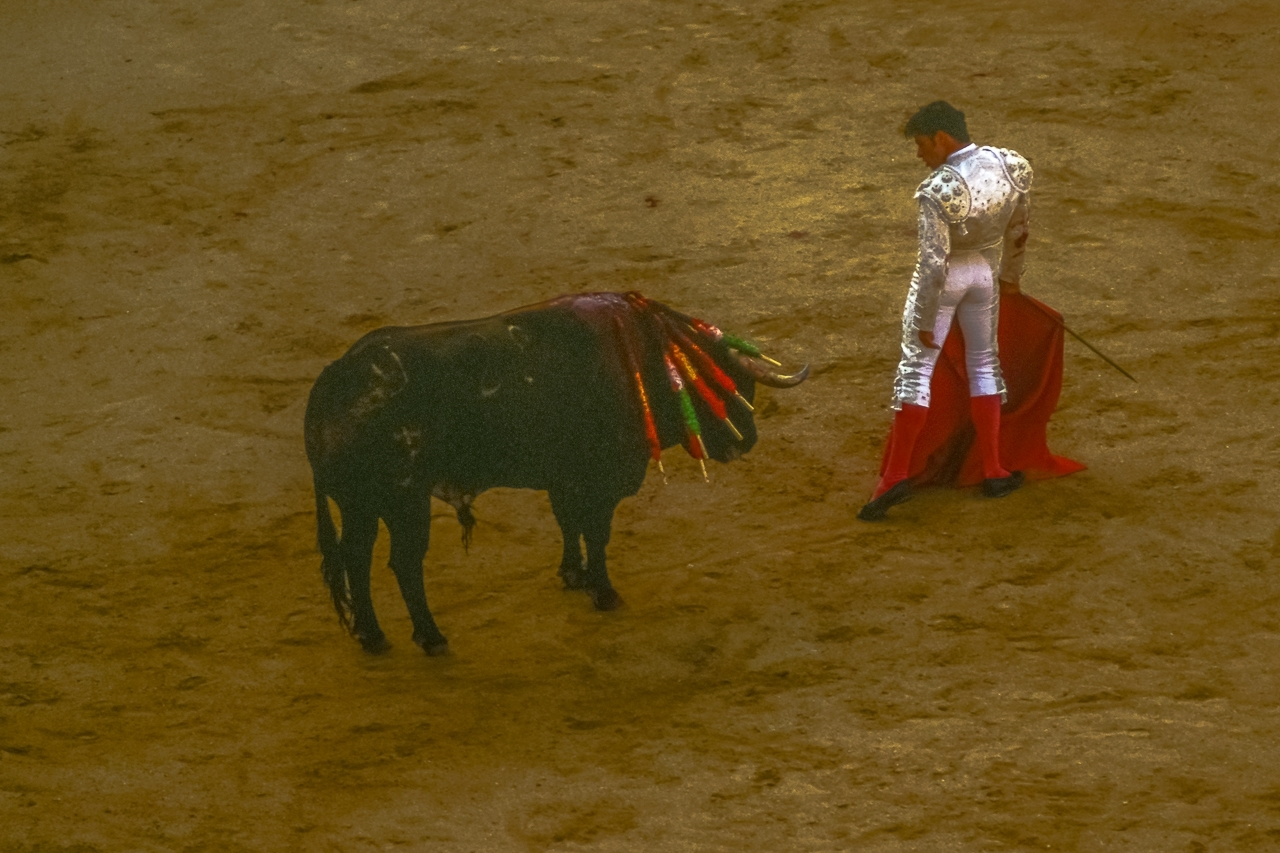 Toreador Turns His Back on the Bull To Show Control