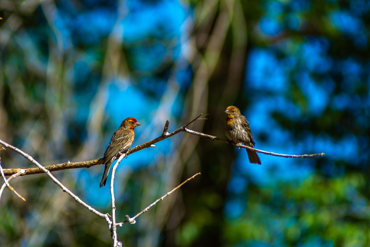 Birds.Jones_T.--4684.jpg