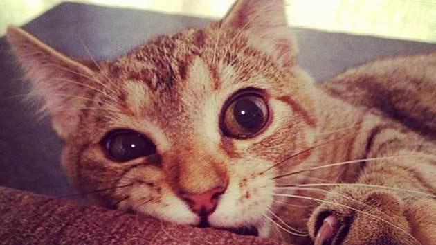 catzmaster.jpg