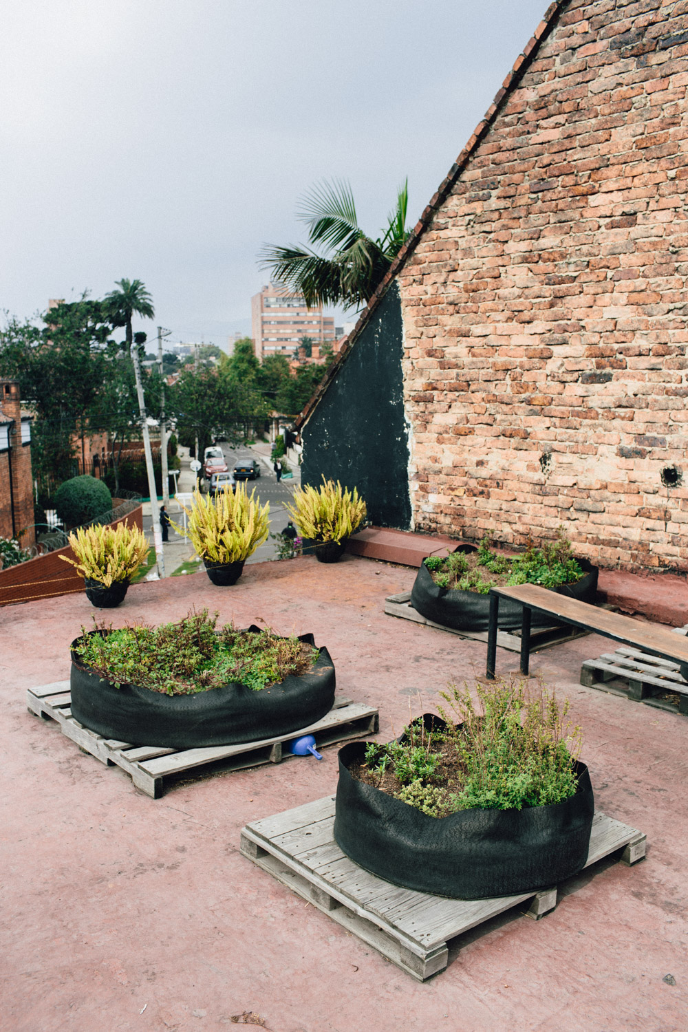 Rooftop herb garden where El Chato grows a variety of traditional and regional herbs for both their savory and sweet dishes.