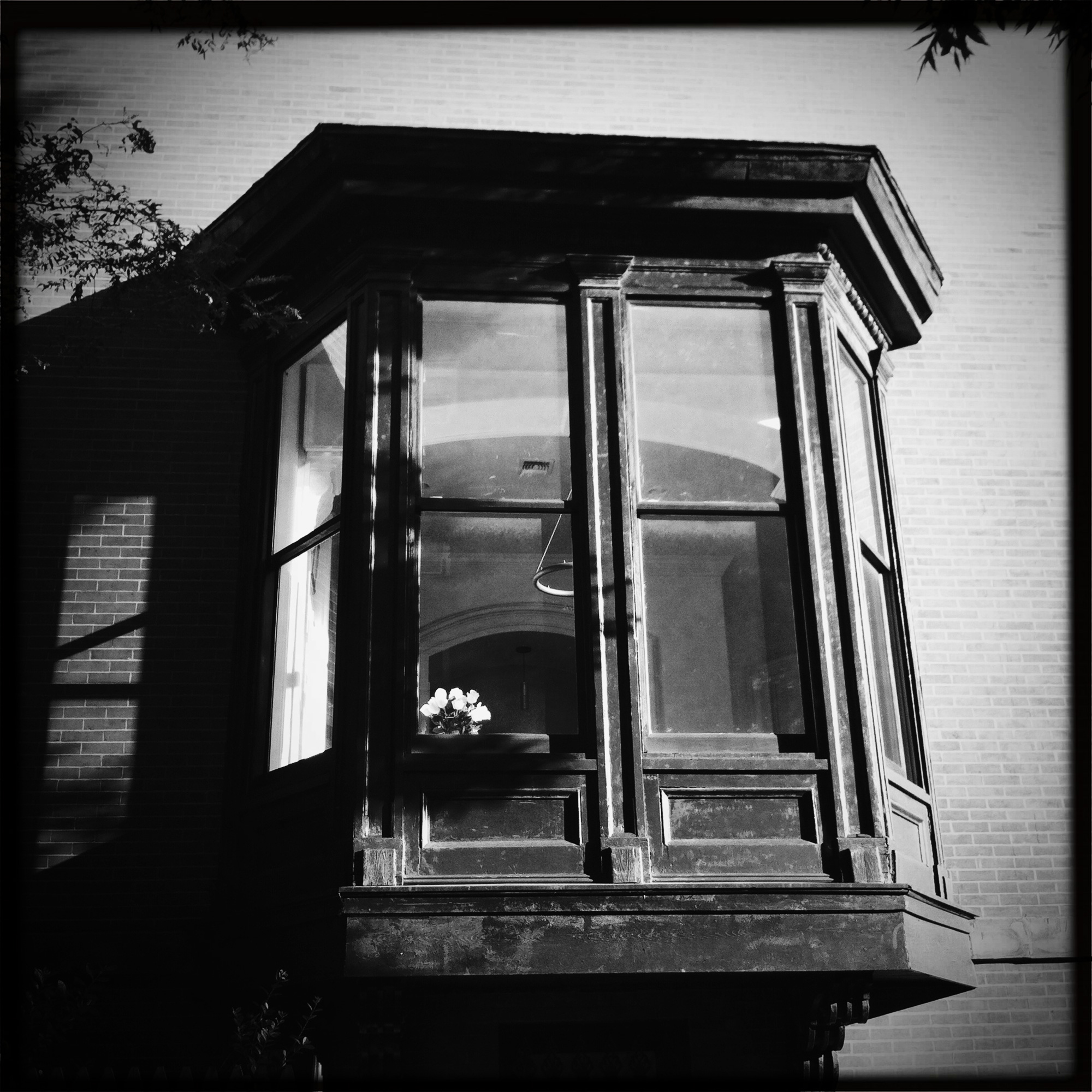 Brooklyn_Tulips_01.jpg