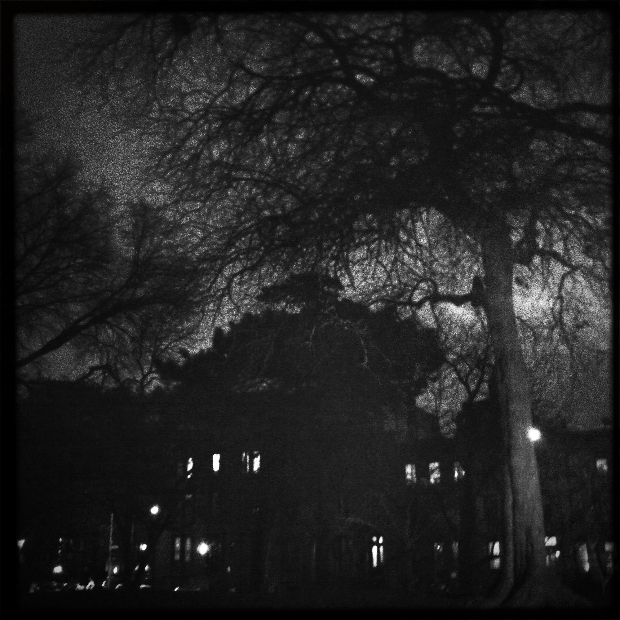Fort_Green_winter_sulstice.jpg