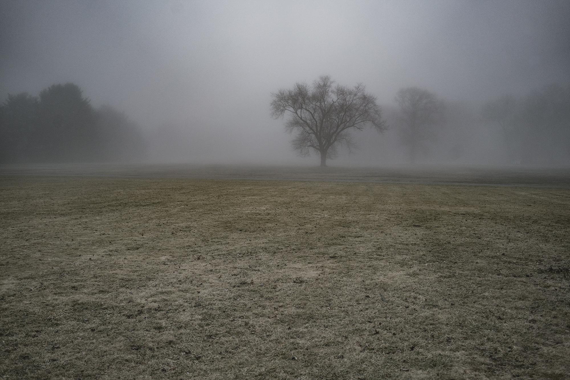 New York_Long_Island_Foggy_Lone_Tree-034.jpg