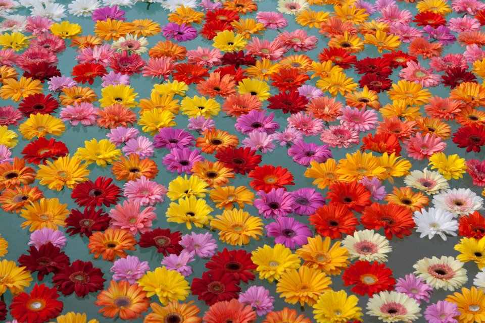 Wedding flowers: Marittima, Italy