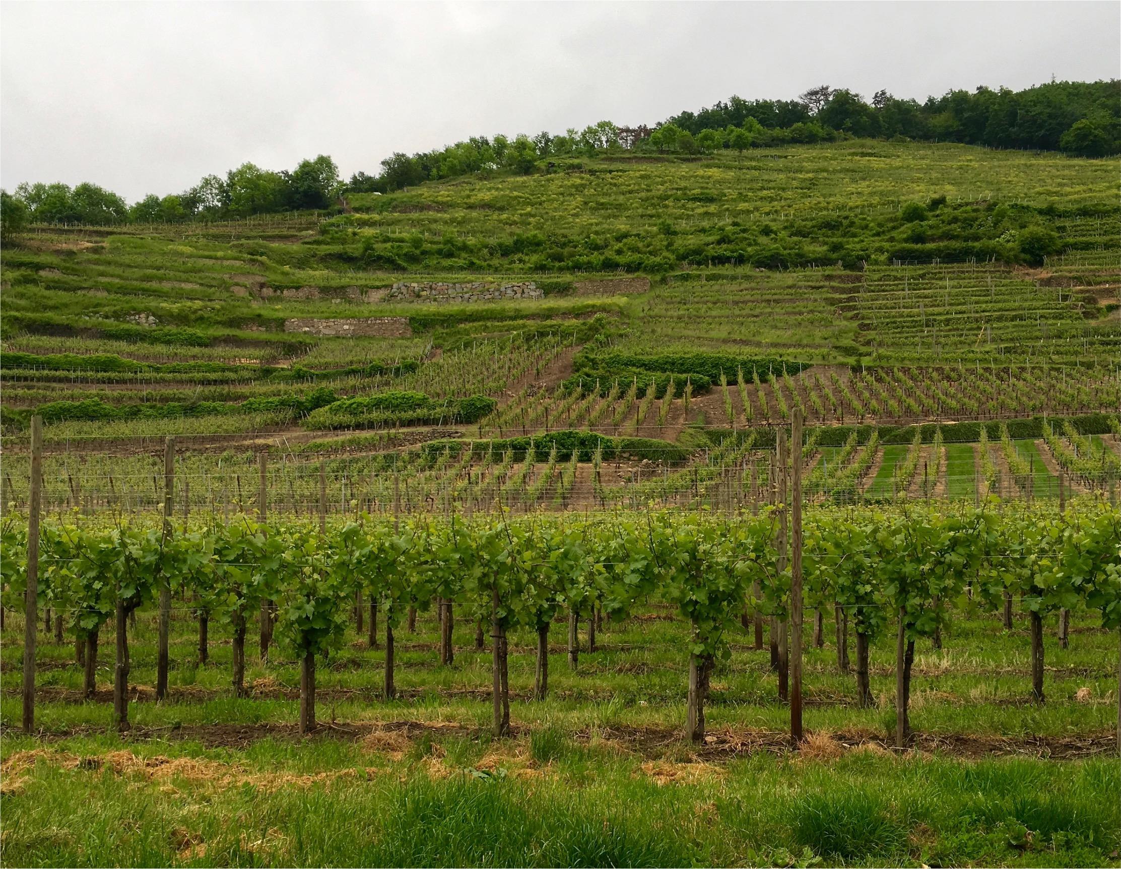 Wine Roads 37-37.jpeg