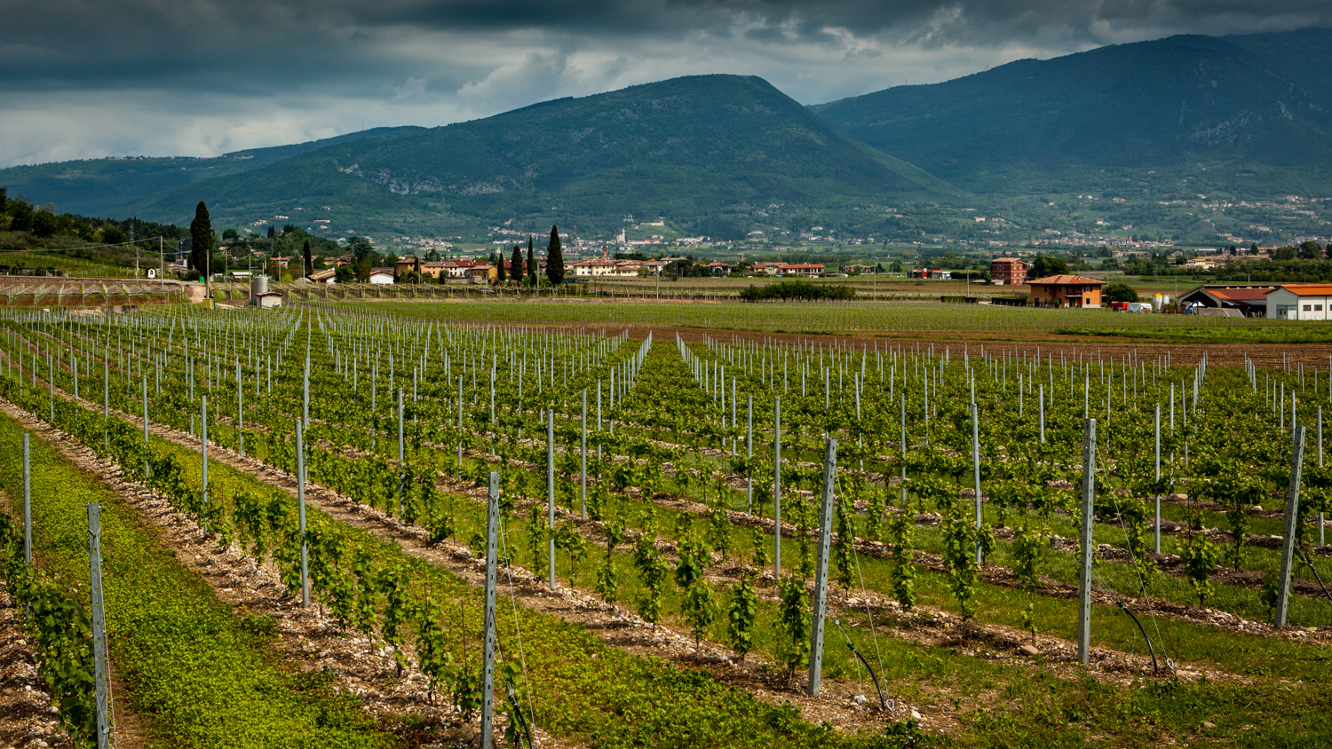 Italy : Veneto : Vineyards in the Bardolino zone